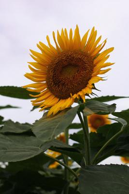 2009-08-11_6120-web2.jpg