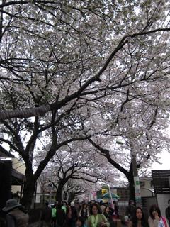 2010-04-04_8955-web1.jpg