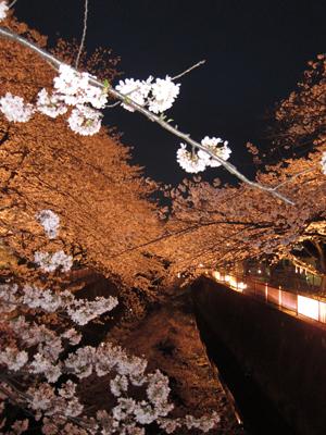 2010-04-04_8978-web3.jpg